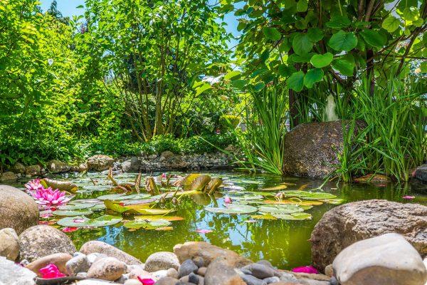 Gartenbau Teich