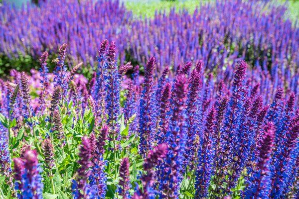 Gartenbau Bepflanzung
