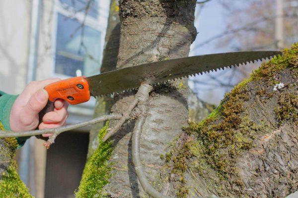 Gartenbau Nuertingen Jetter Baumpflege