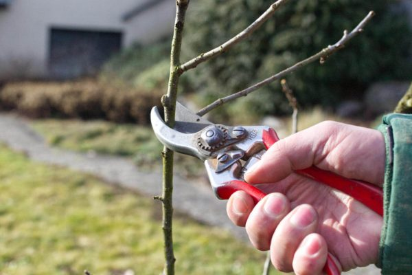 Pflege Baumpflege