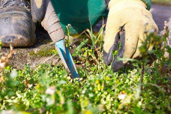 Pflege Gartenpflege